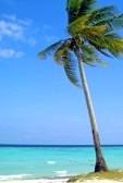 7480619-coco-palm-sur-la-plage-prend-le-ile-thailande