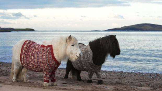 poney_pull